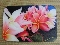 Cutting Board - Multi-color plumeria design